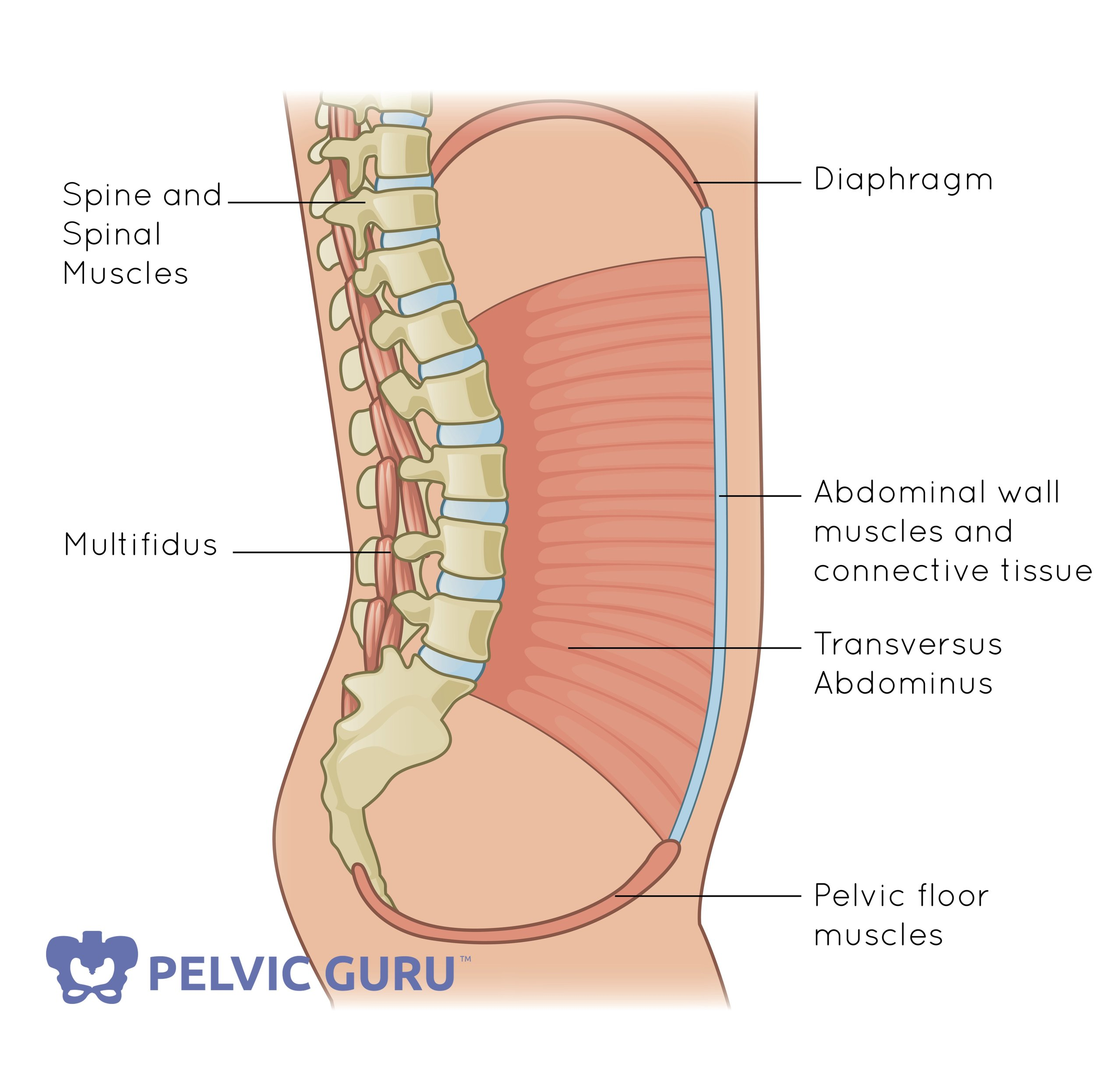 Pelvic Guru owns the rights to this image.