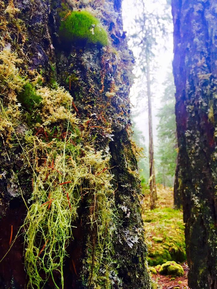 Love me some lichens!