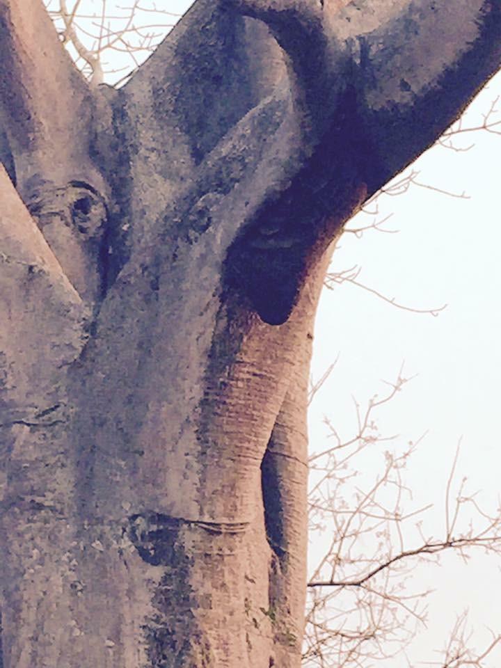 Wild Honey Bees - Gorongosa National Park - Mozambique