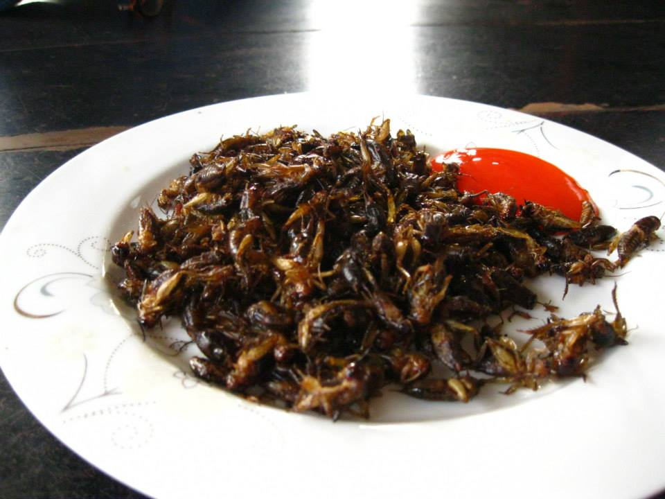 We were treated to some fried cricket snacks. I could totally see swapping these out for popcorn at the movies. They are a great mindless munching food.