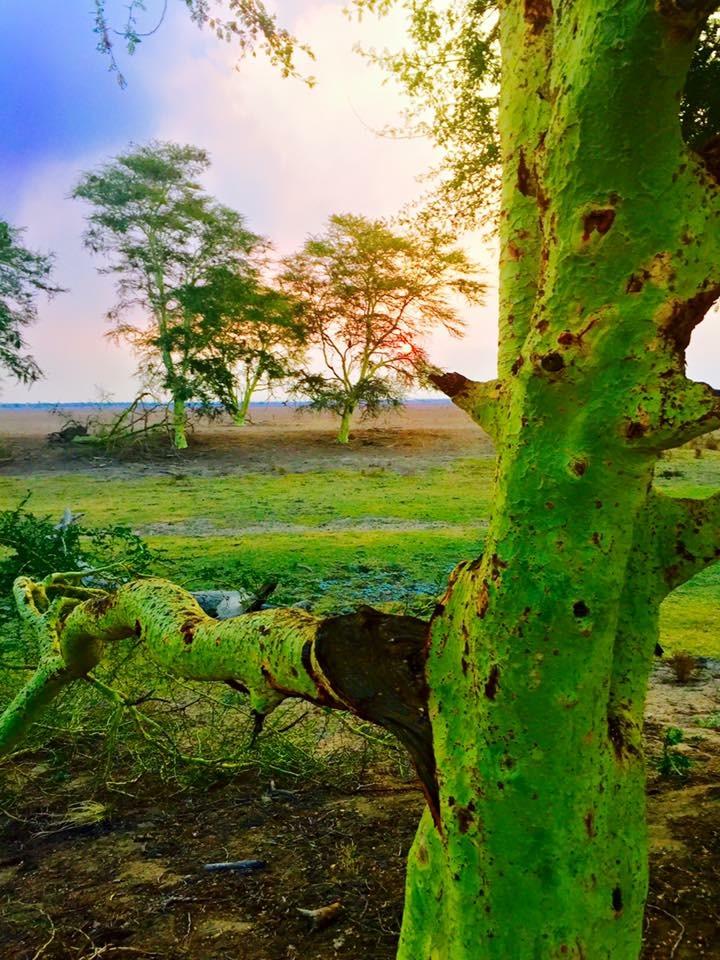 Africa -