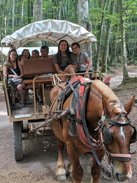 Our carriage with our horse Guapo.