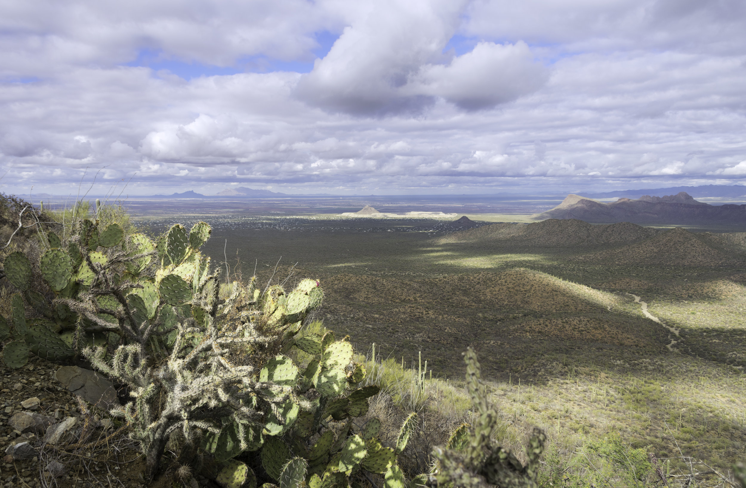 Prickly Pear Vista.jpg