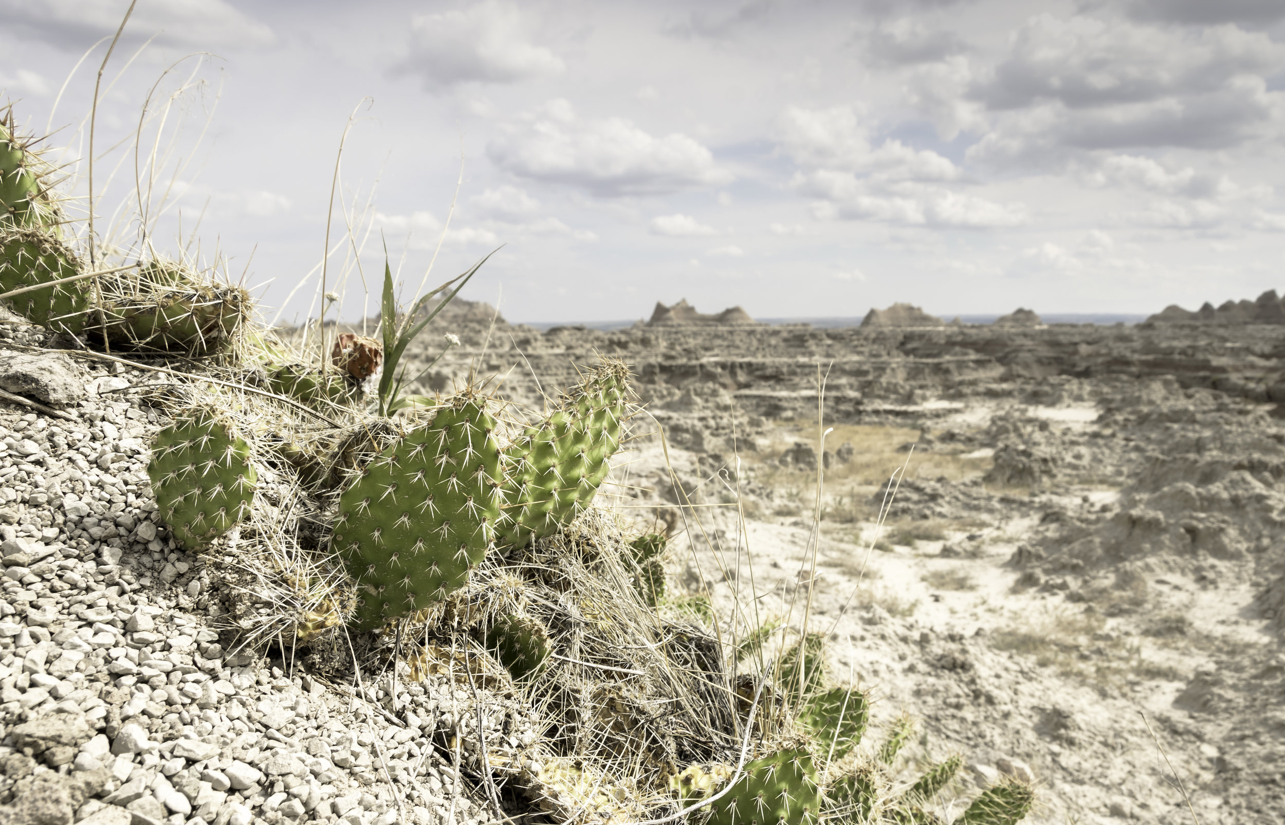Cactus Close up.jpg