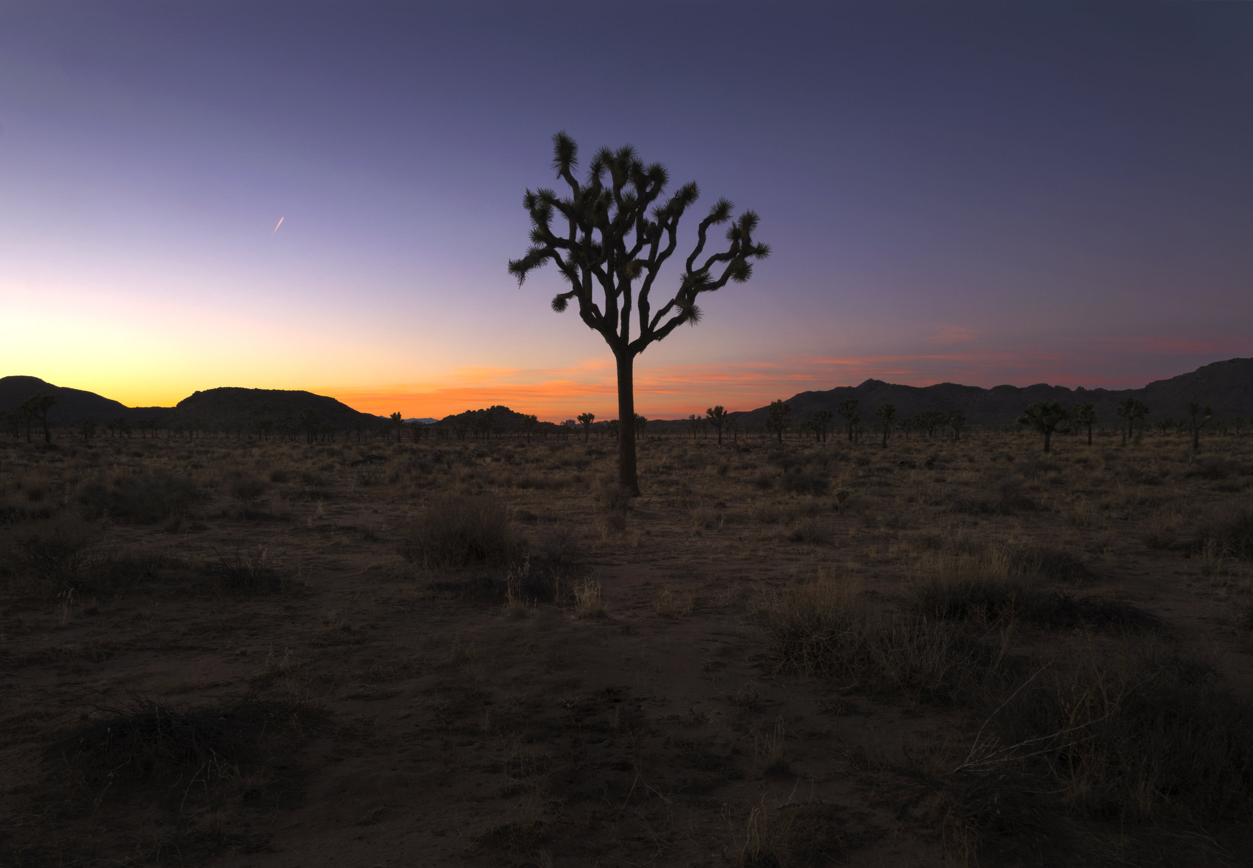 Purple Joshua Tree Sunset.jpg