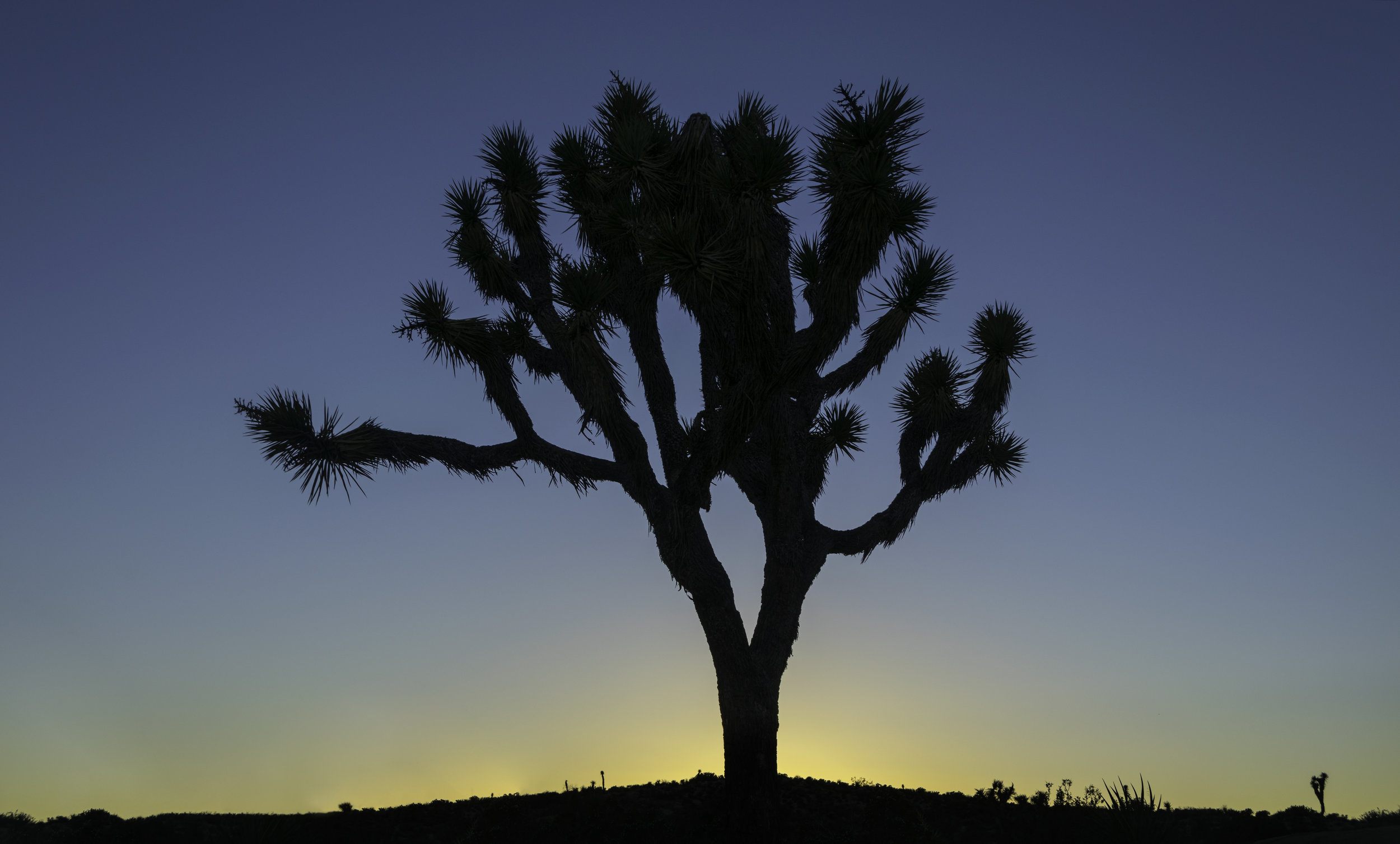 Turquoise Joshua Tree Sunset.jpg