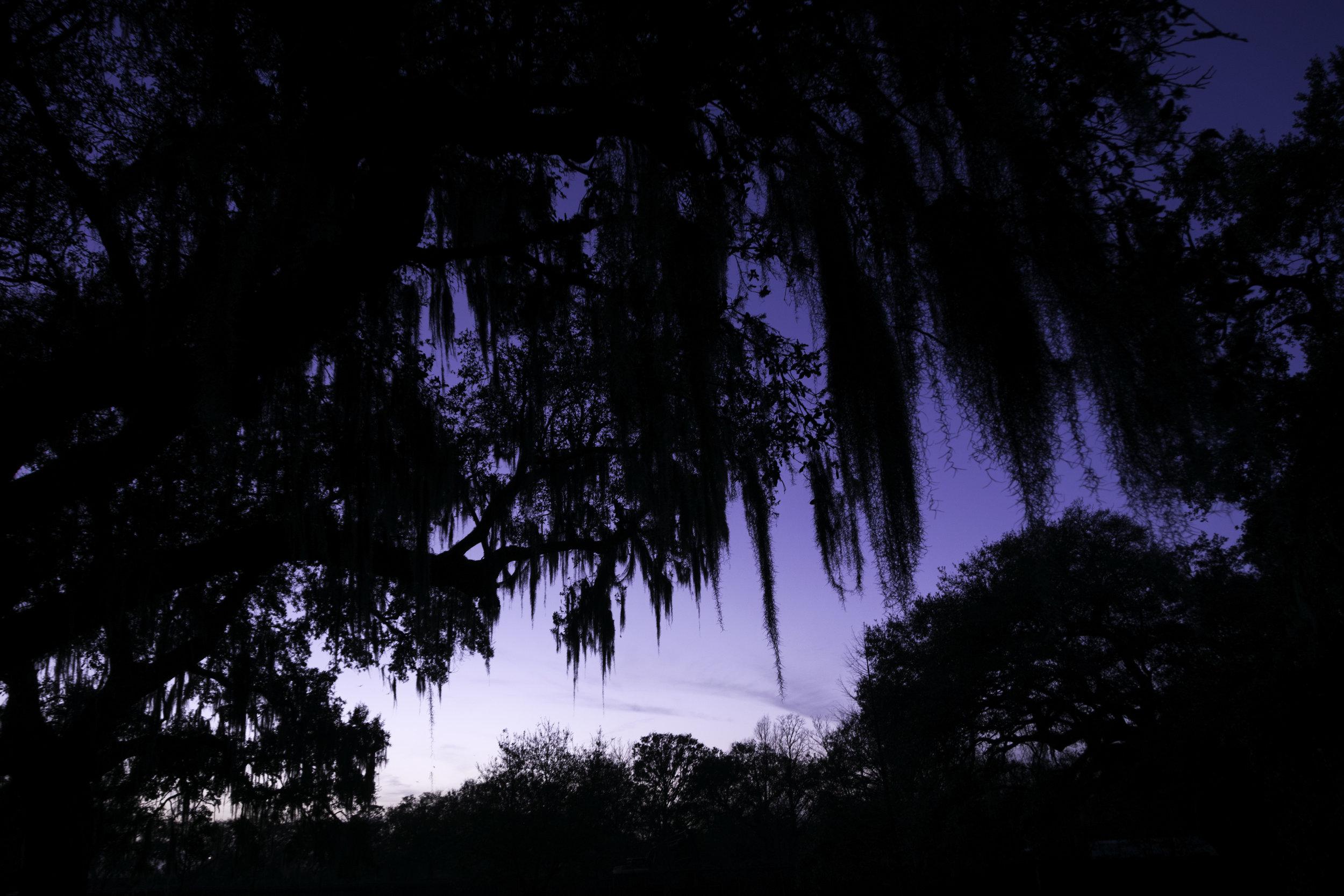 Spanish Moss Purple Sky.jpg