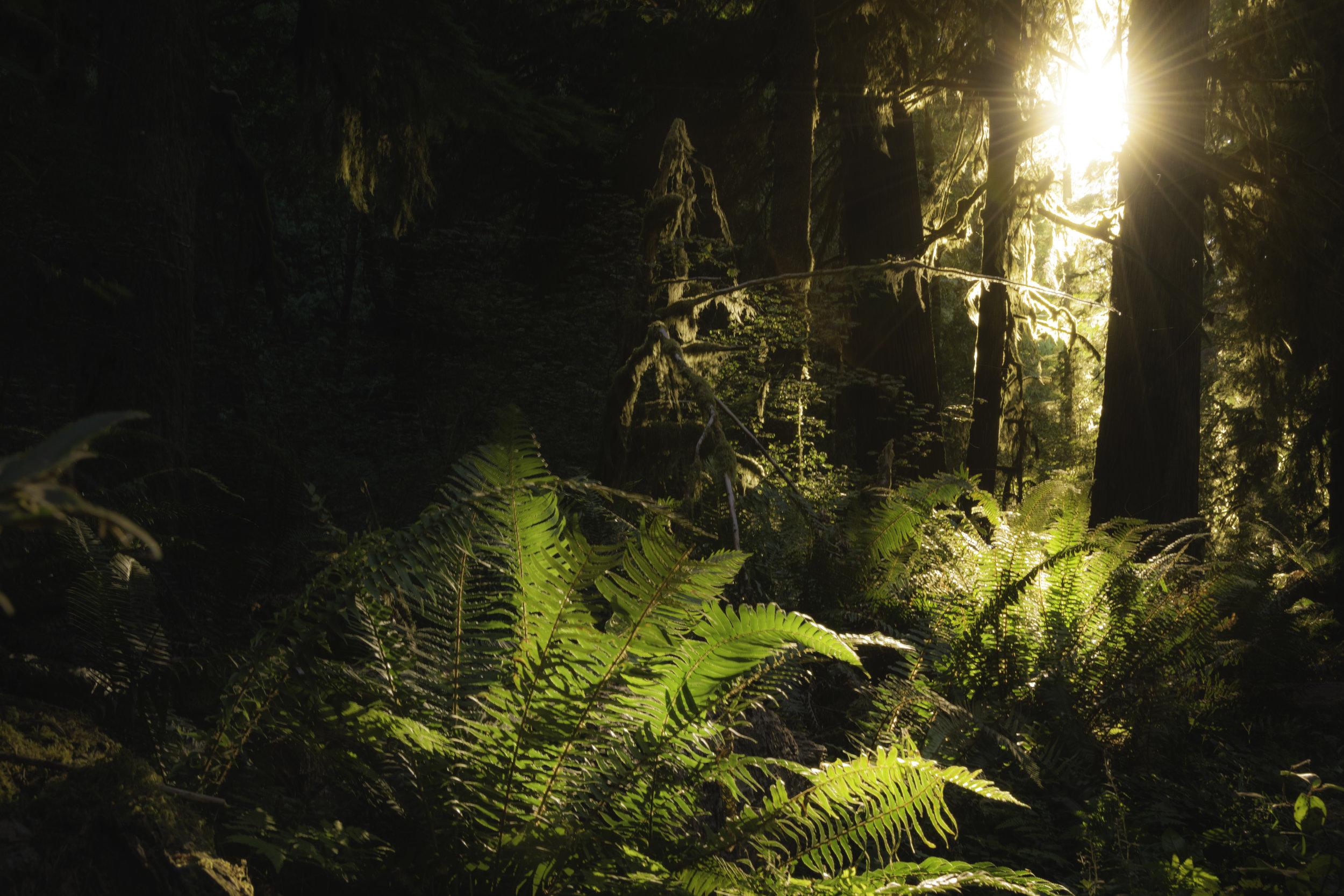 Rainforest Sun.jpg