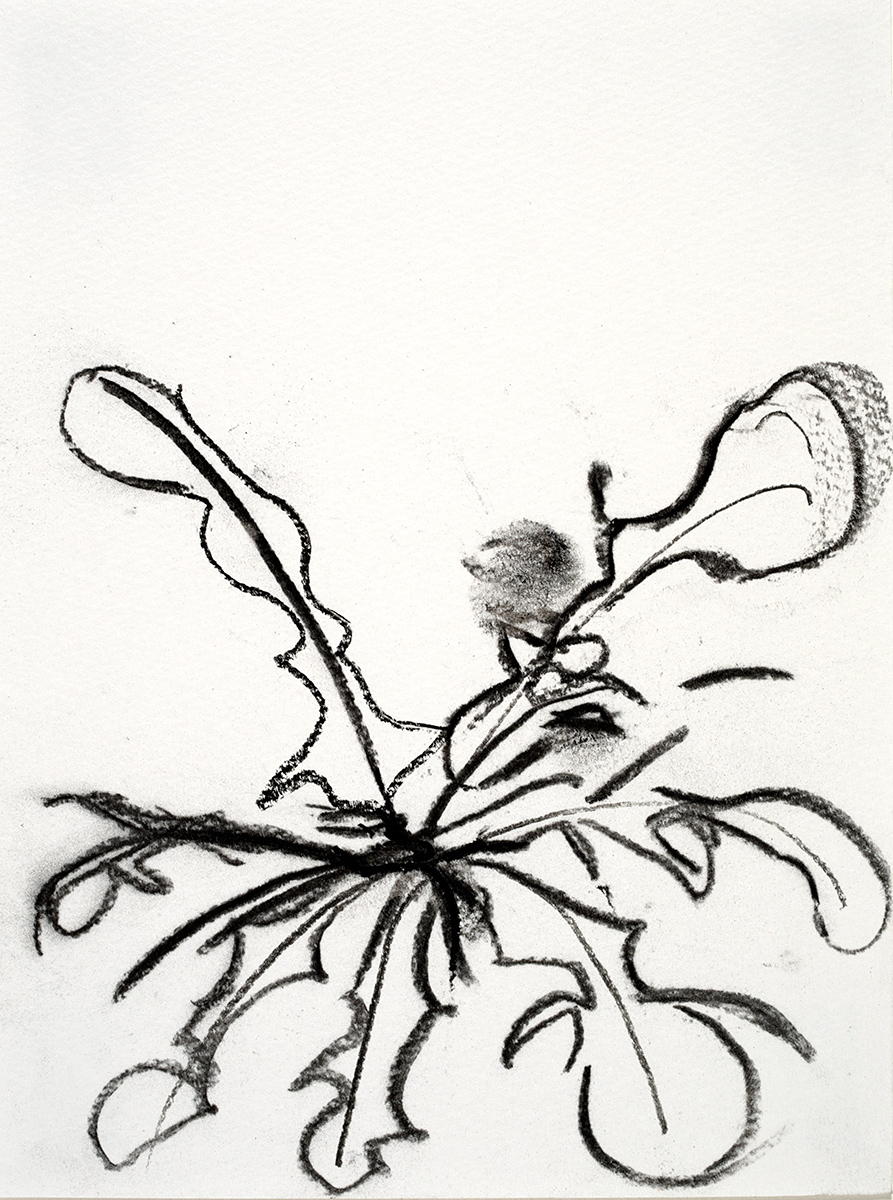 Weeds  2018 charcoal on paper 5.5 x 7.5 in.