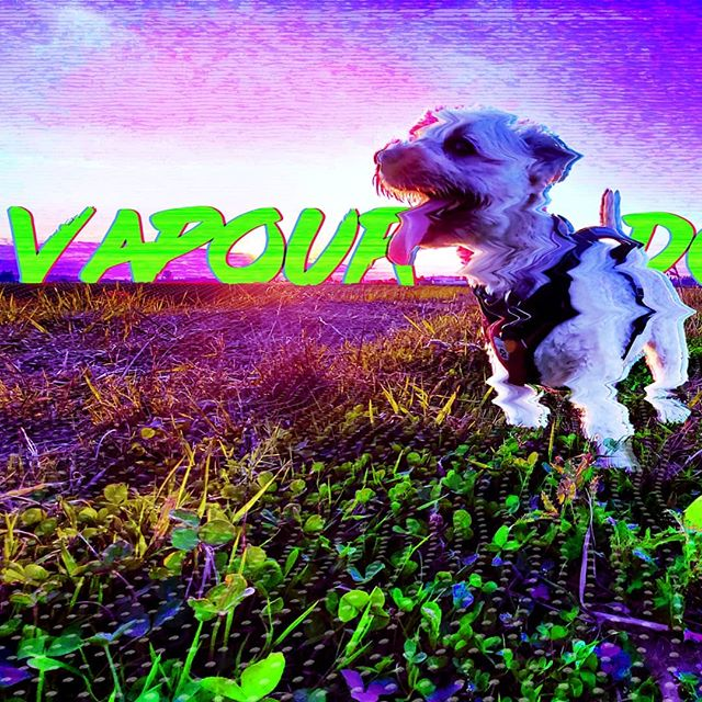 Youtube.com/proteusEd Make any photo into the Vapour Wave style. 80s, computer, neon, and more. It's a pretty interesting style of editing and I'll show you how.  #proteused #art #photoshop #vaporwave #vapourwave #editing #pets #animals #dog #dogs #dogsofinstagram