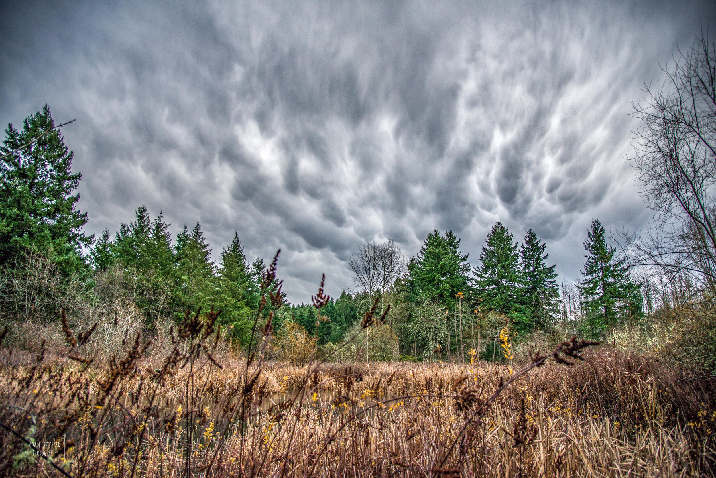 Mammatus clouds over the pond at Adriana Hess Wetland Park. Photo Credit: Adam Pritchard
