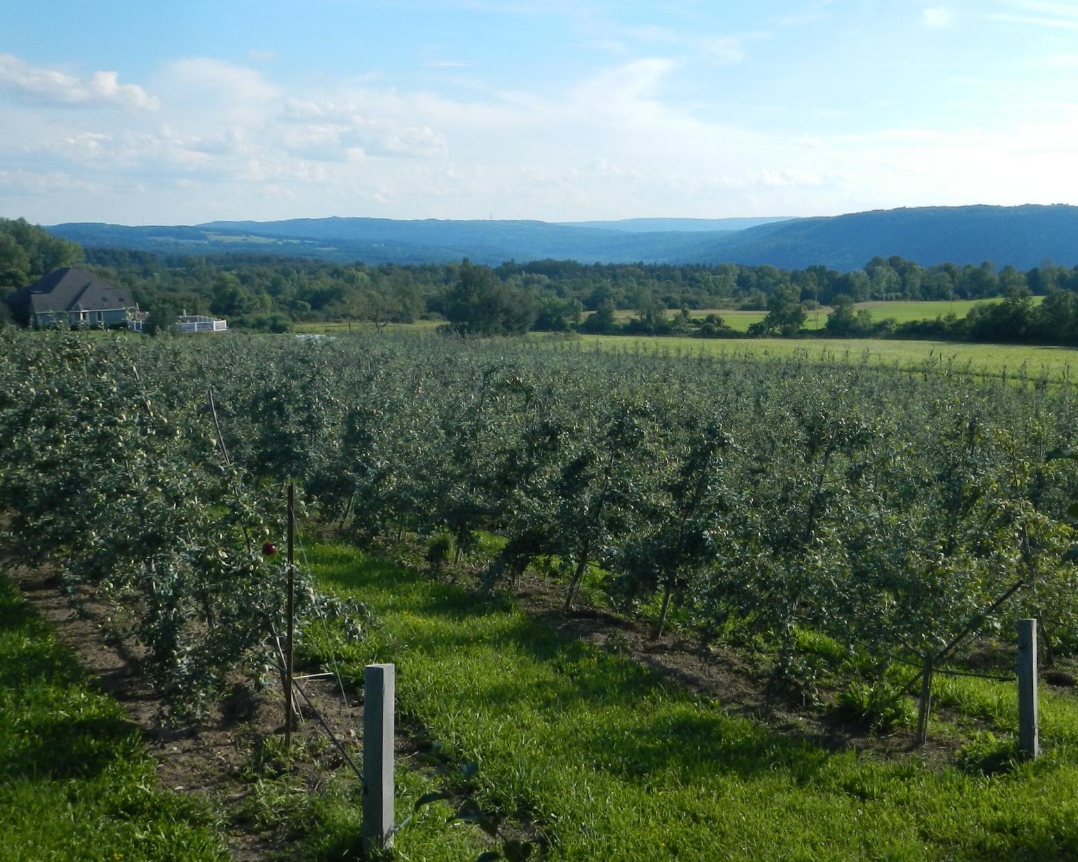Adams Acres Organic Apple Farm Jamesville, NY