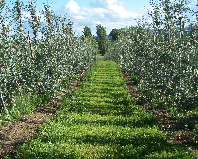Contact Organic Apple Farm