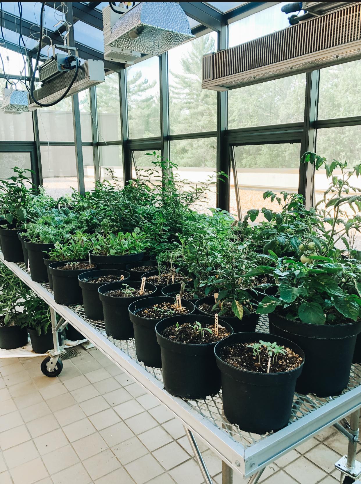 organic-garden-wisconsin-dells.jpg
