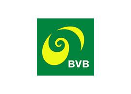 BVB.jpg