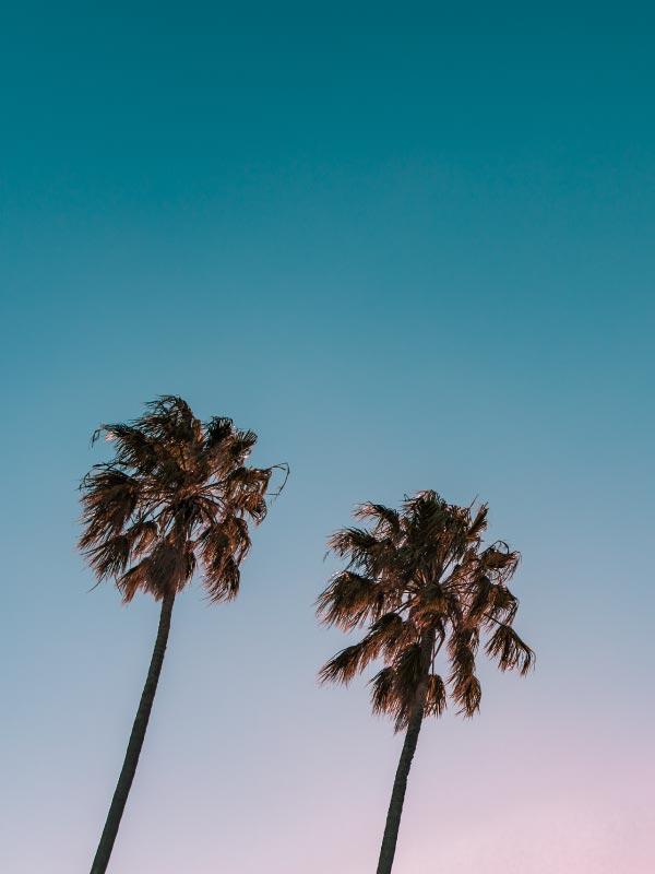 palm-trees-optimized.jpg