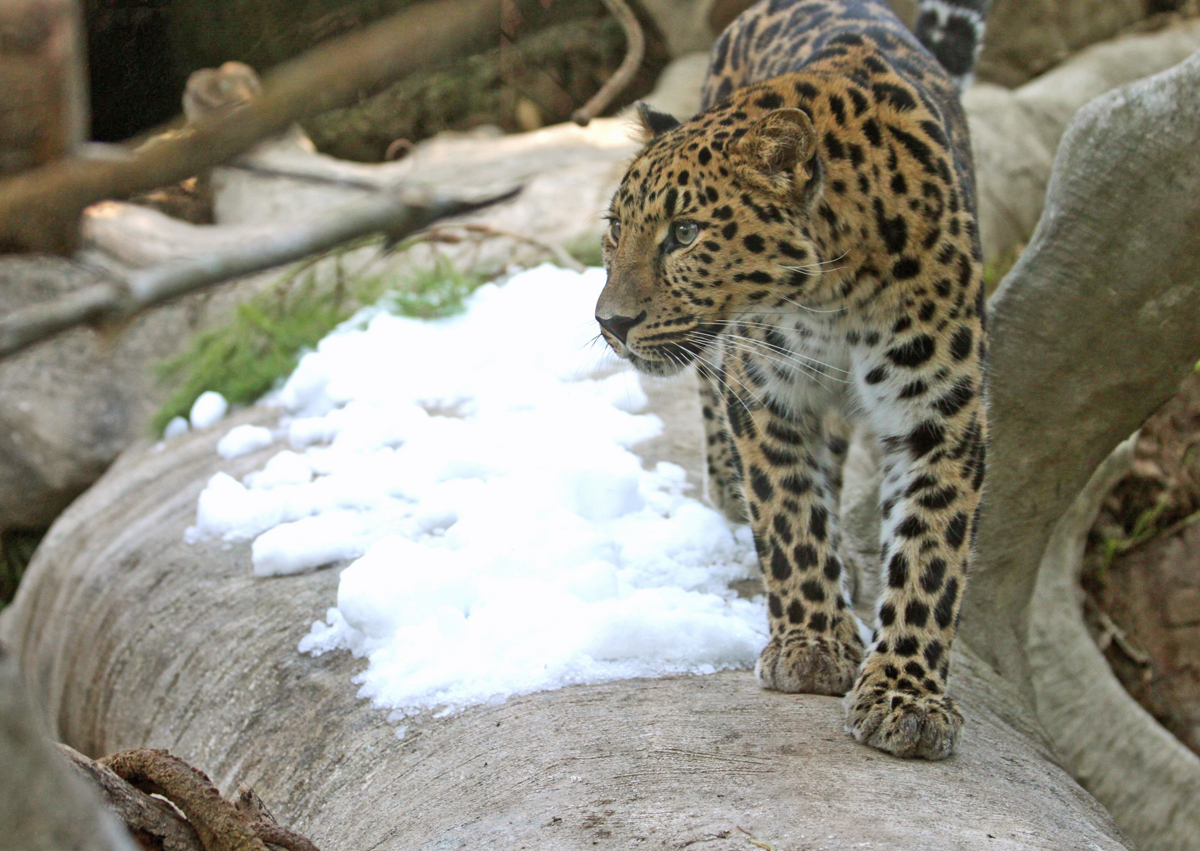 The Zoo - The Santa Barbara Zoo is dedicated to the preservation, conservation, and enhancement of the natural world and its living treasures through education, research, and recreation.