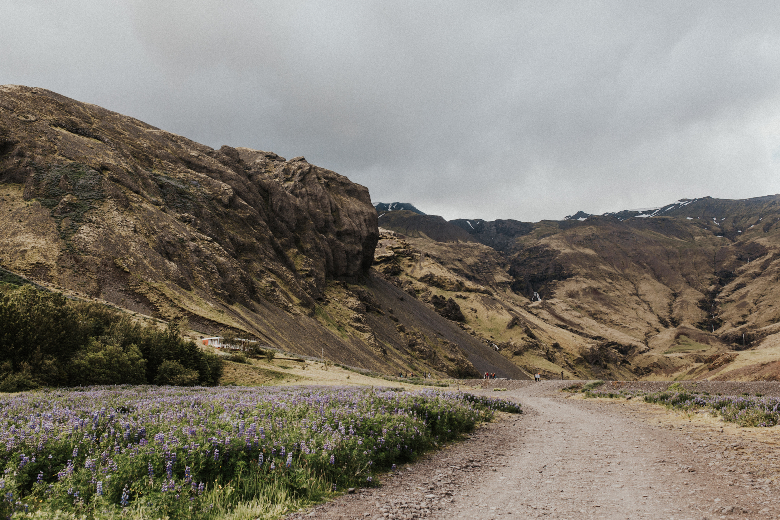 Icelandic landscape with wildflowers.jpg
