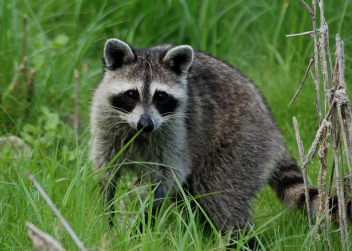 Aggieland critter control-%i