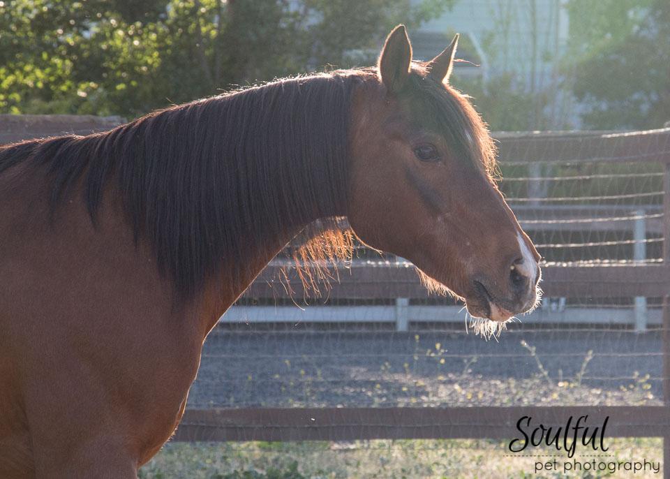 Horses 01 v2.jpg