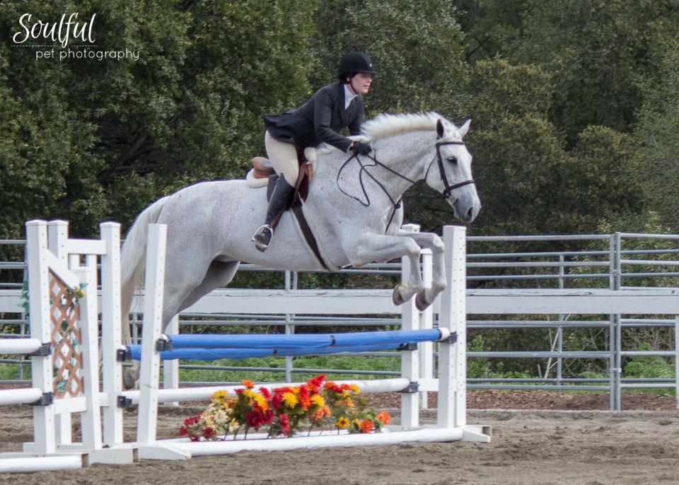 Horses 06 v2.jpg