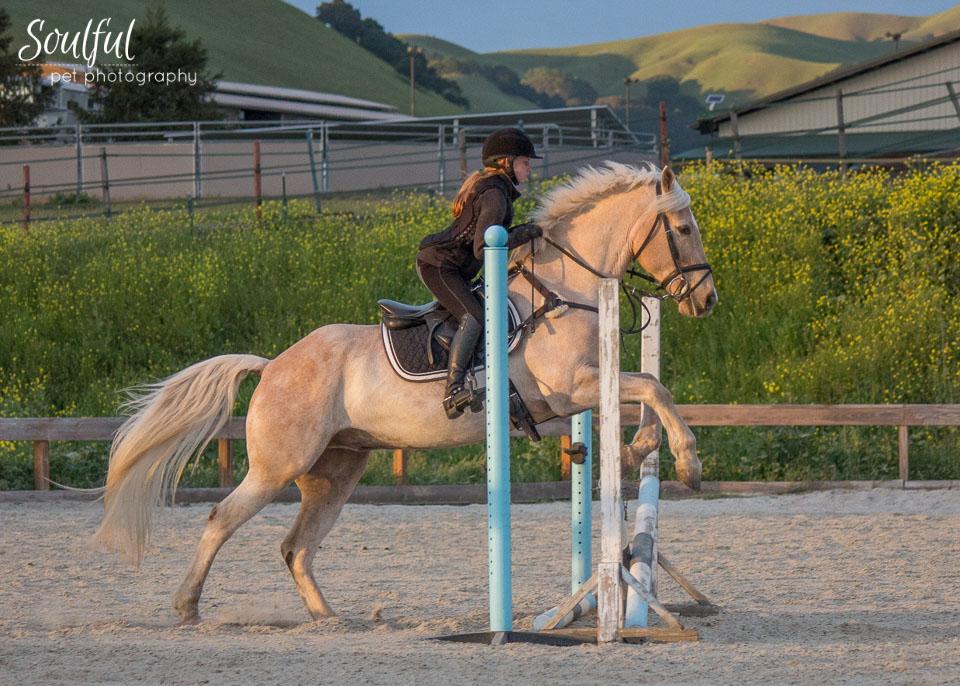 Horses 03 v2.jpg