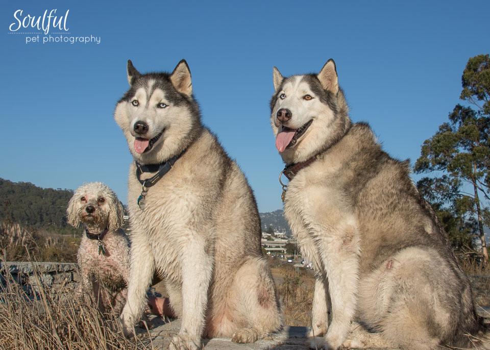 Posed Three Dogs.jpg