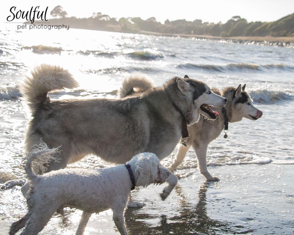Three Dogs Together.jpg