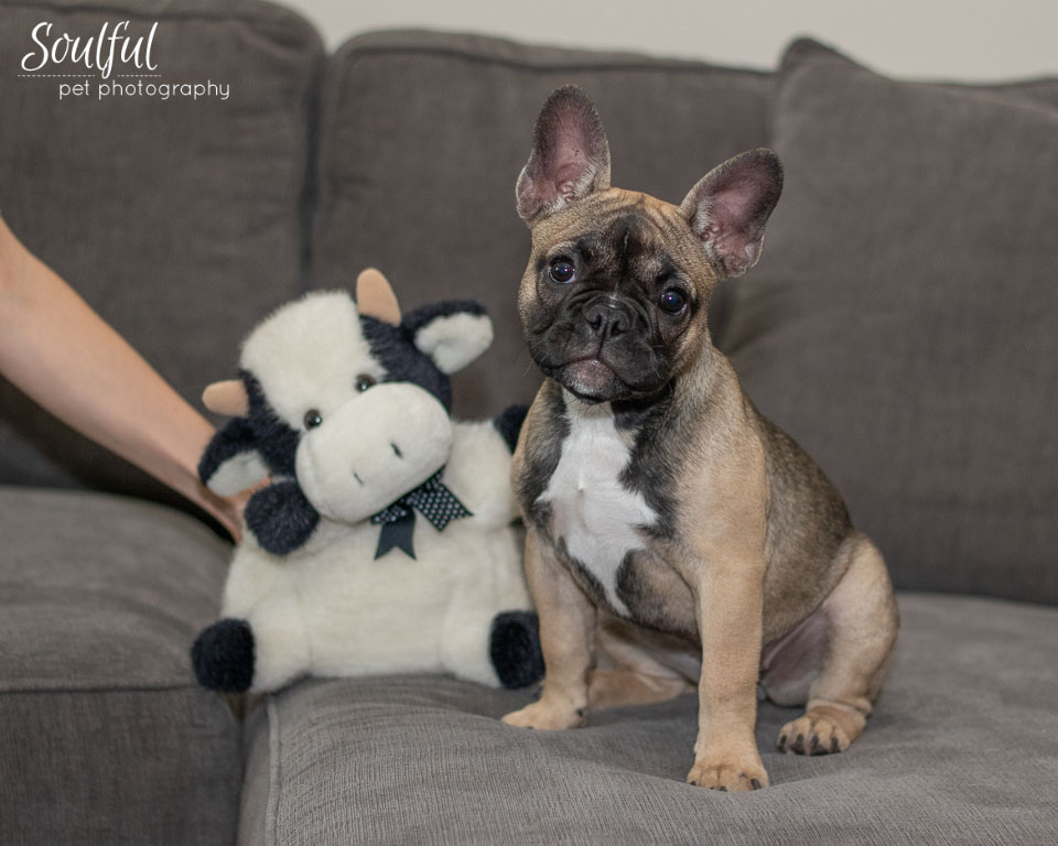 - We made sure to get a photo of Daisy next to a stuffed animal. It's always fun to get a photo of a young pet next to something that gives you a sense of scale – in a year or two you can take another photo to show how much your pet has grown.
