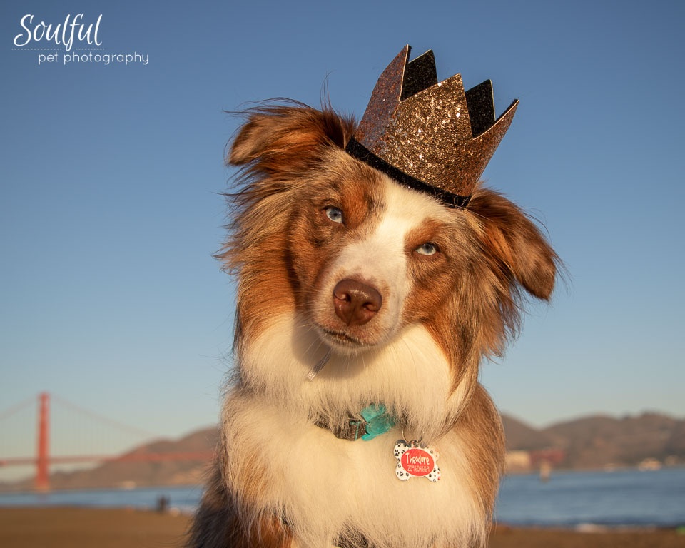 - And a head tilt shot, with birthday crown, at 1 year.