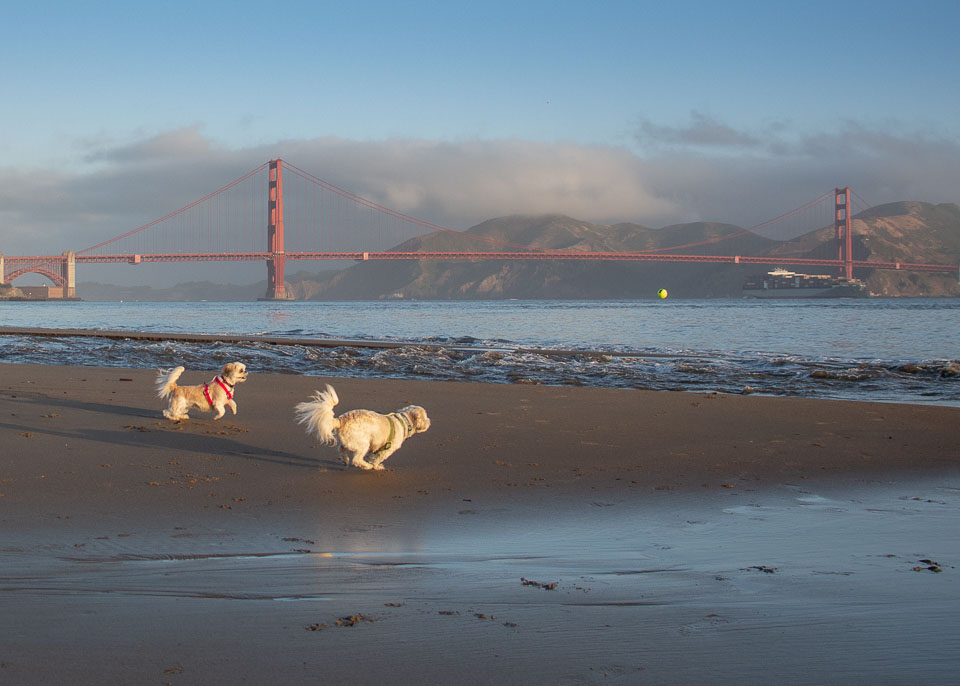 No Crowds - Get to popular locations before the crowds for fewer distractions from other people and dogs.