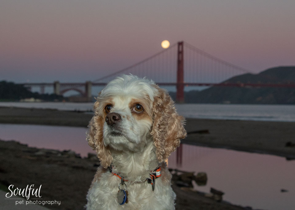 - Ginger, a Cocker Spaniel mix, was my willing subject. Here the sky still has colors from the pre-dawn twilight.