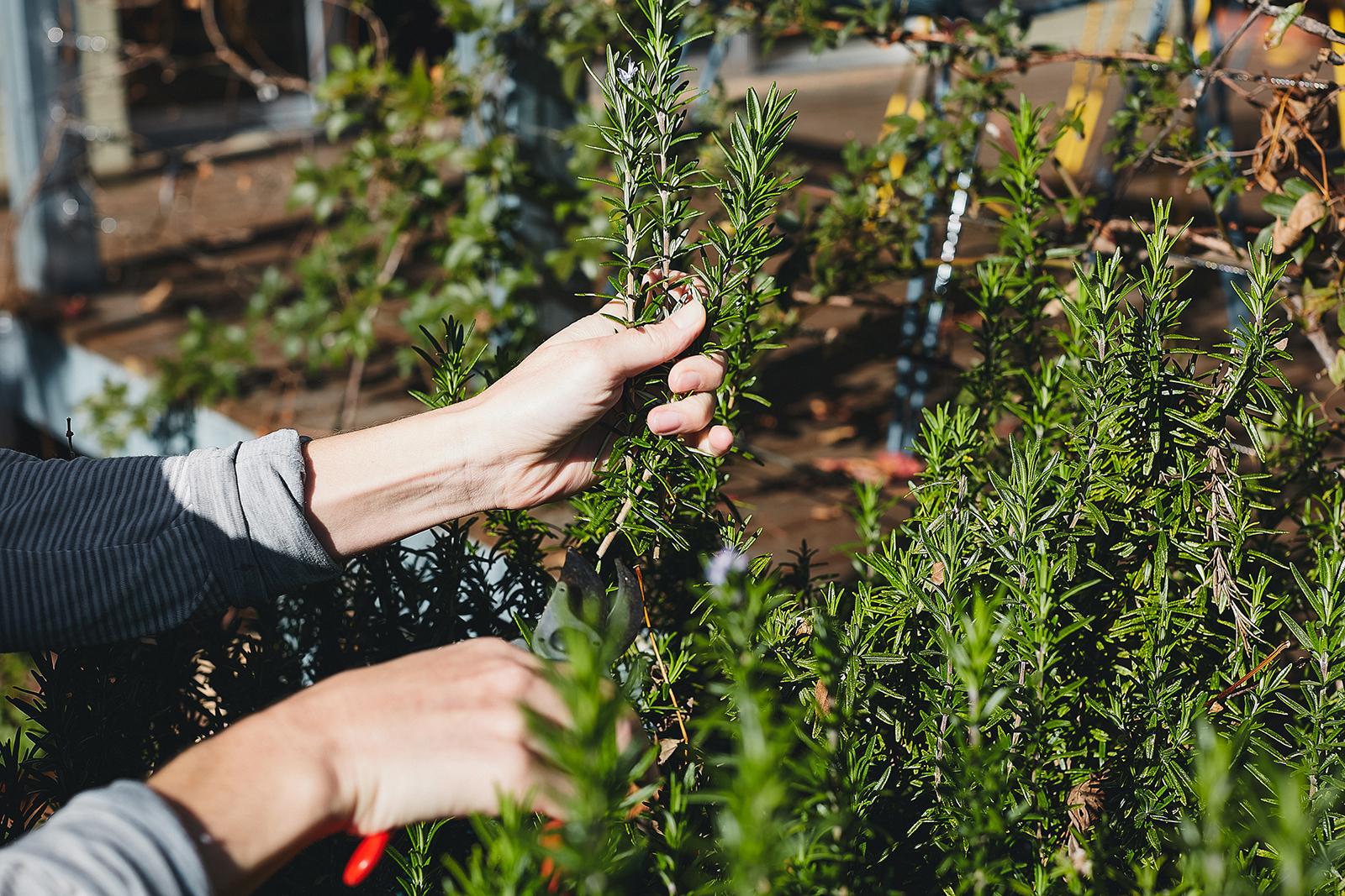 herb gardens -