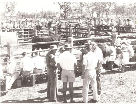 1964 Bull Sale in Wallumbilla Yards