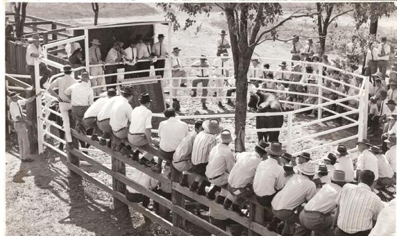 First Bull Sale on property 'Yarrawonga'
