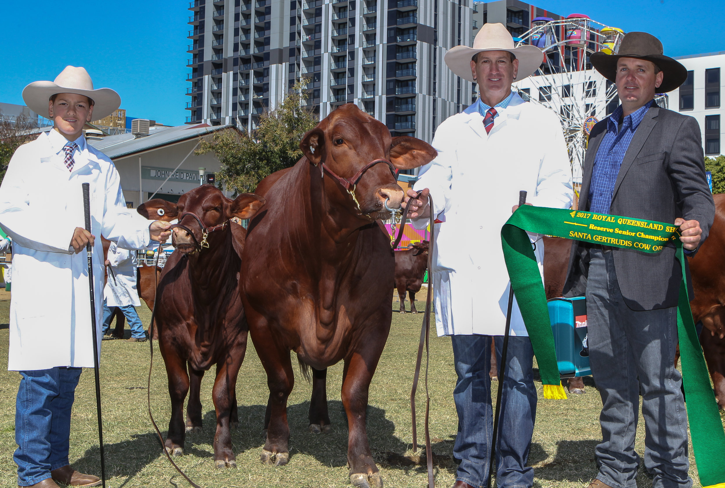 Waco Frankie and calf Waco Nancy- Reserve Senior Champion Cow awarded the Dangarfield Cattle Company trophy. Trophy presented by Ben Adams. Cow led by David Bassingthwaighte and calf led by Drew Bassingthwaighte