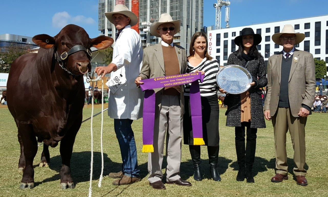 Junior Champion Bull- Yarrawonga Fixer L664 (P) awarded the Eidsvold Station Trophy presented by Anthony Coates and Alice Greenup with Fiona and Alastair Bassingthwaighte. Led by Jacob Wilson.