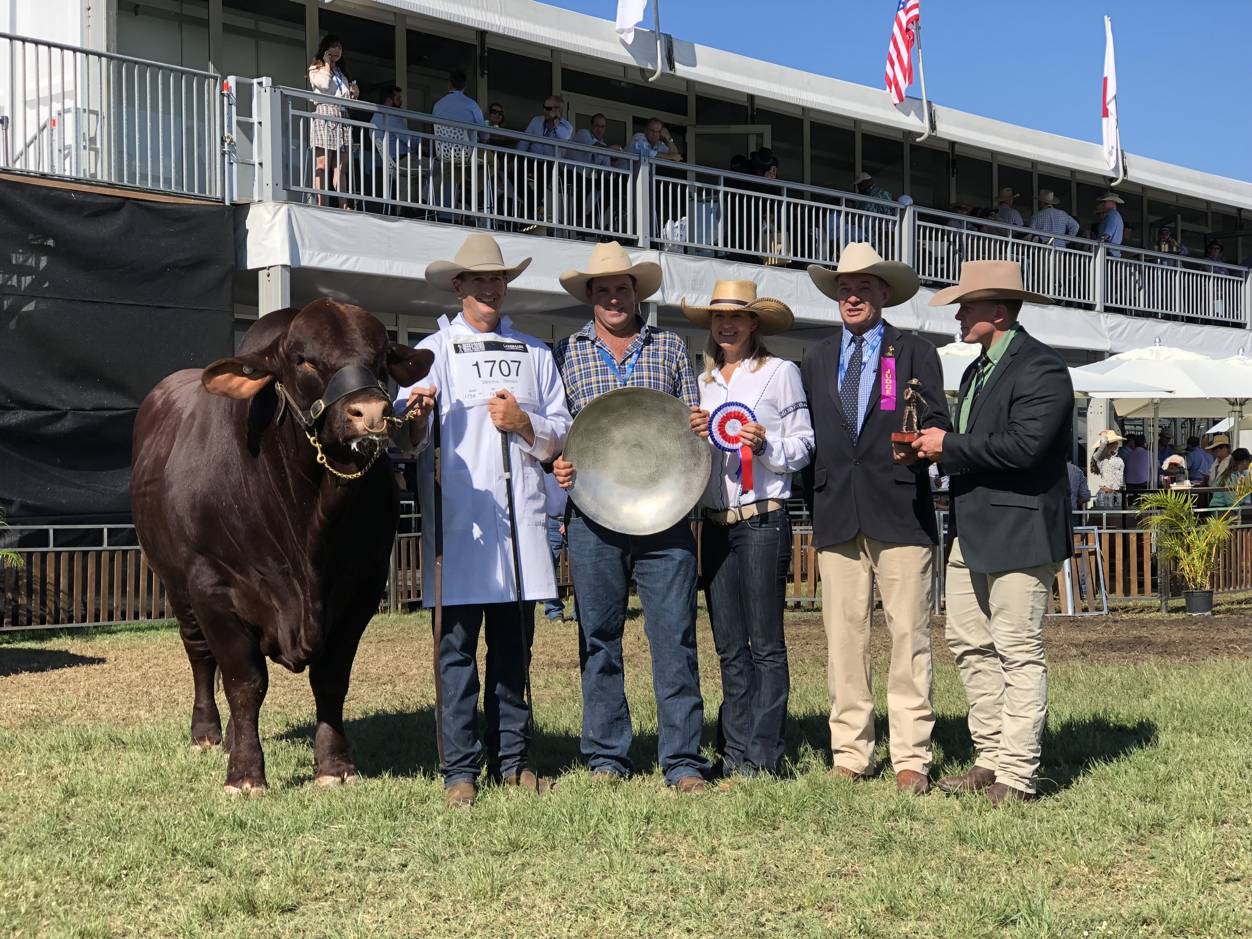 Grand Champion Santa Gertrudis Bull: Waco Massi. Led by David Bassingthwaighte, Trophy donors: Scott & Bec Dunlop with Judge David Bondfield and Colby Ede from Landmark.