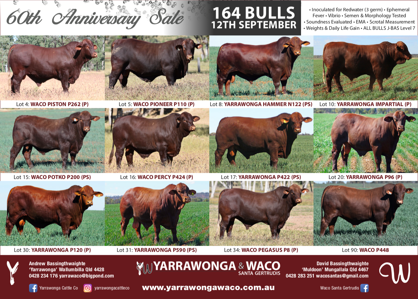 YW QCL Ad 19.png