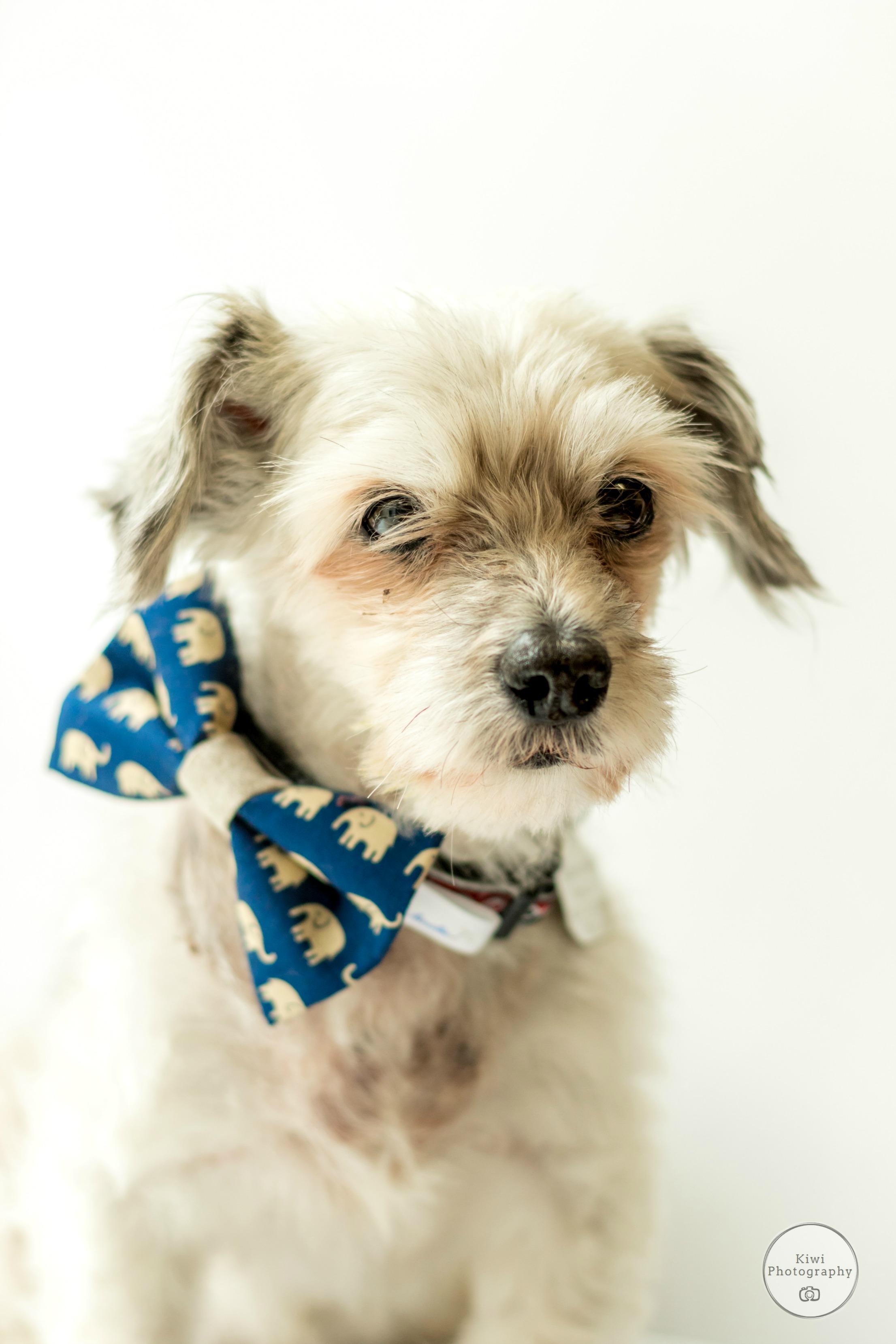 Ottawa Freedom Dog Rescue