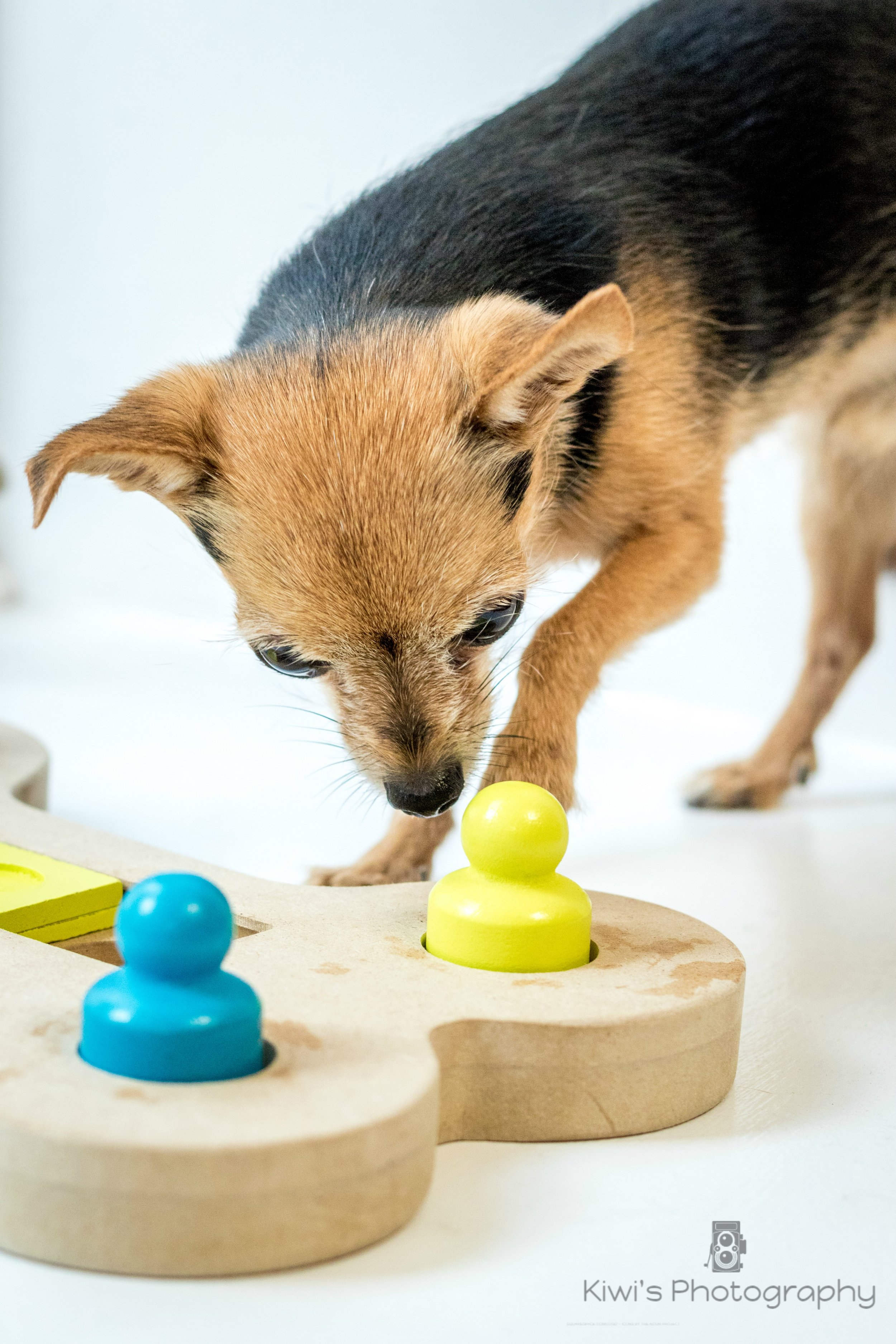 Review of Mod Bone Wood Puzzle for Dogs