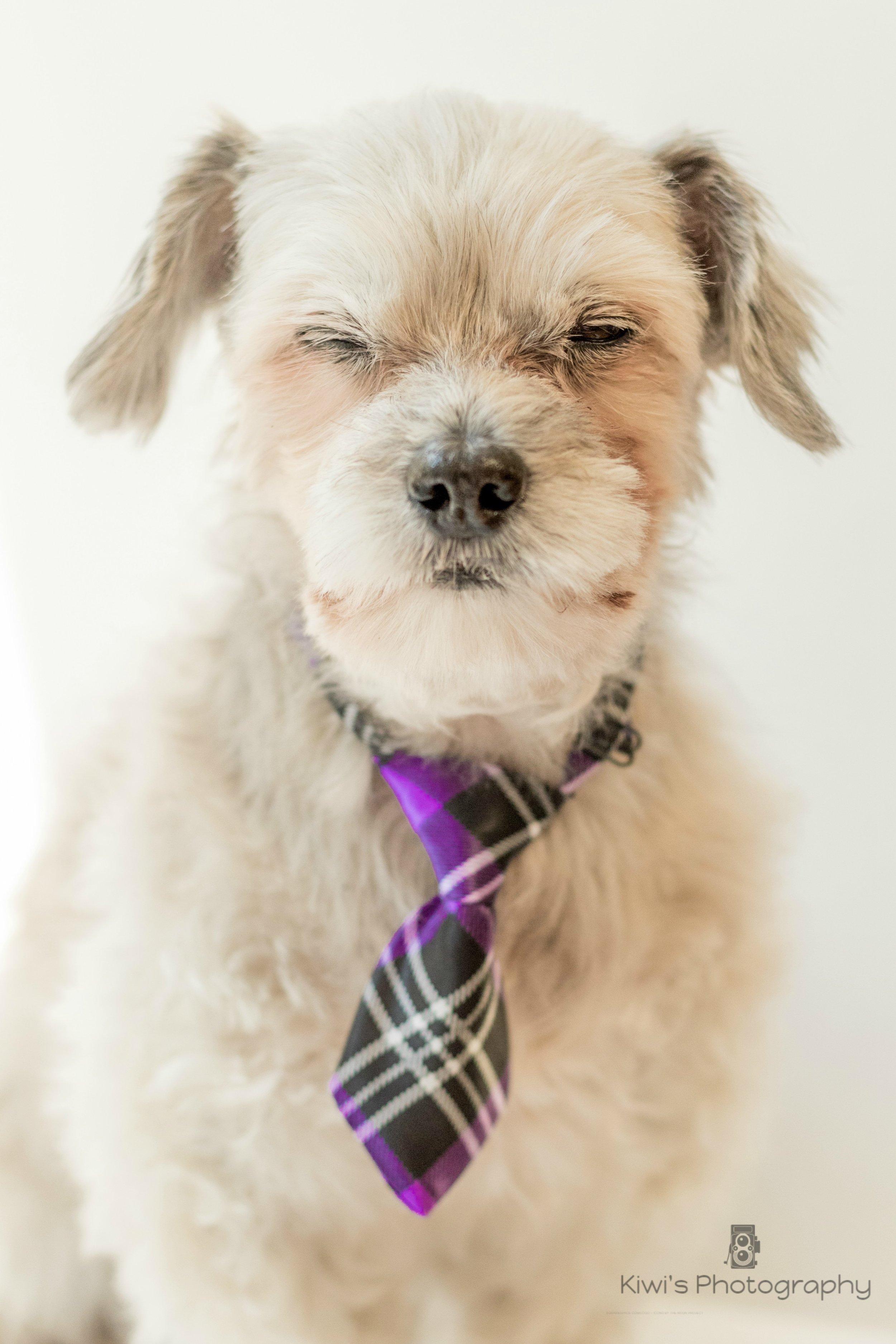 Ottawa Freedom Dog Rescue Alumni, Winnie