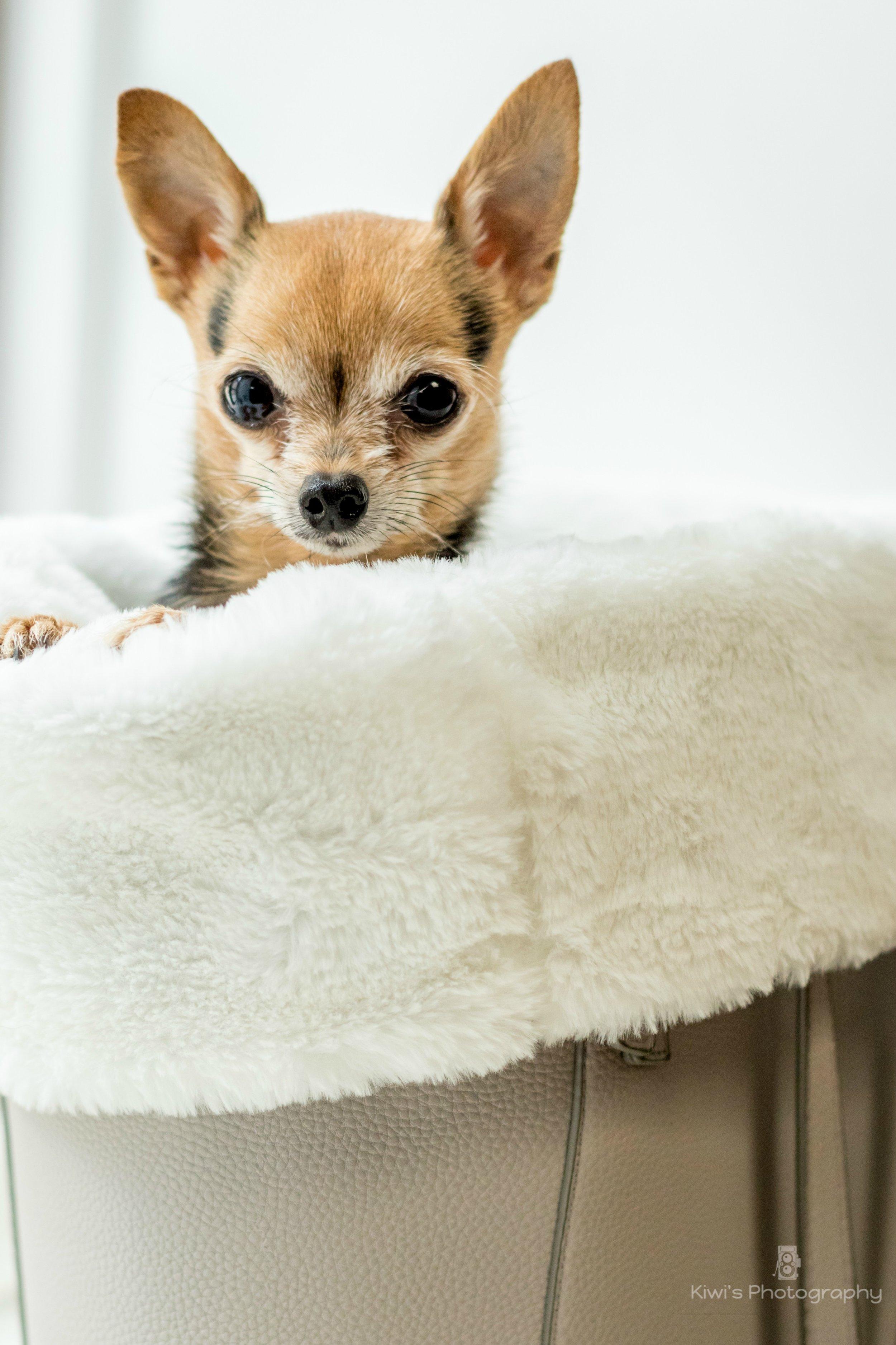 Sacs de transport et accessoires pour chiens