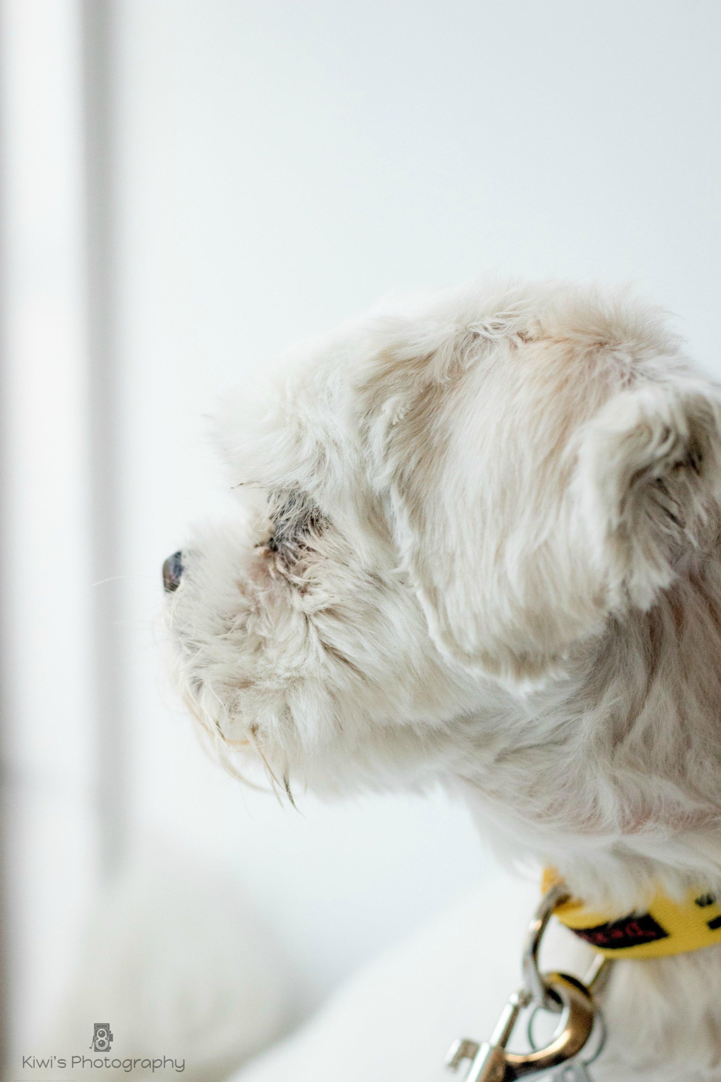 Freedom Dog Rescue, Ottawa, Foster Dog Leica