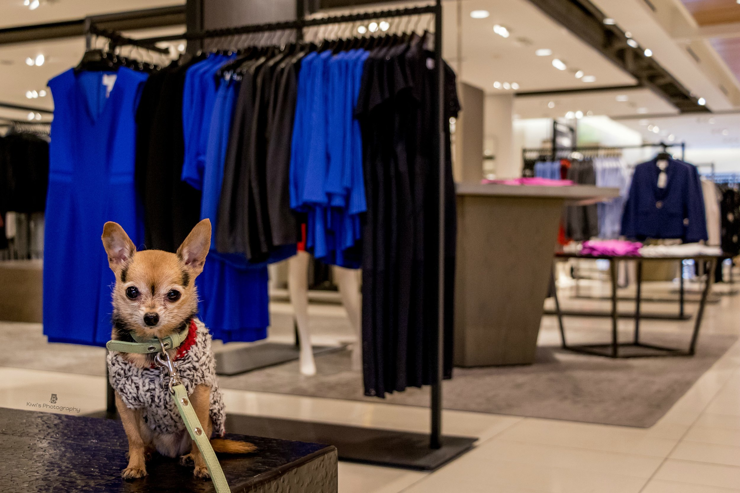 Dog Friendly Ottawa - Nordstrom Rideau Centre