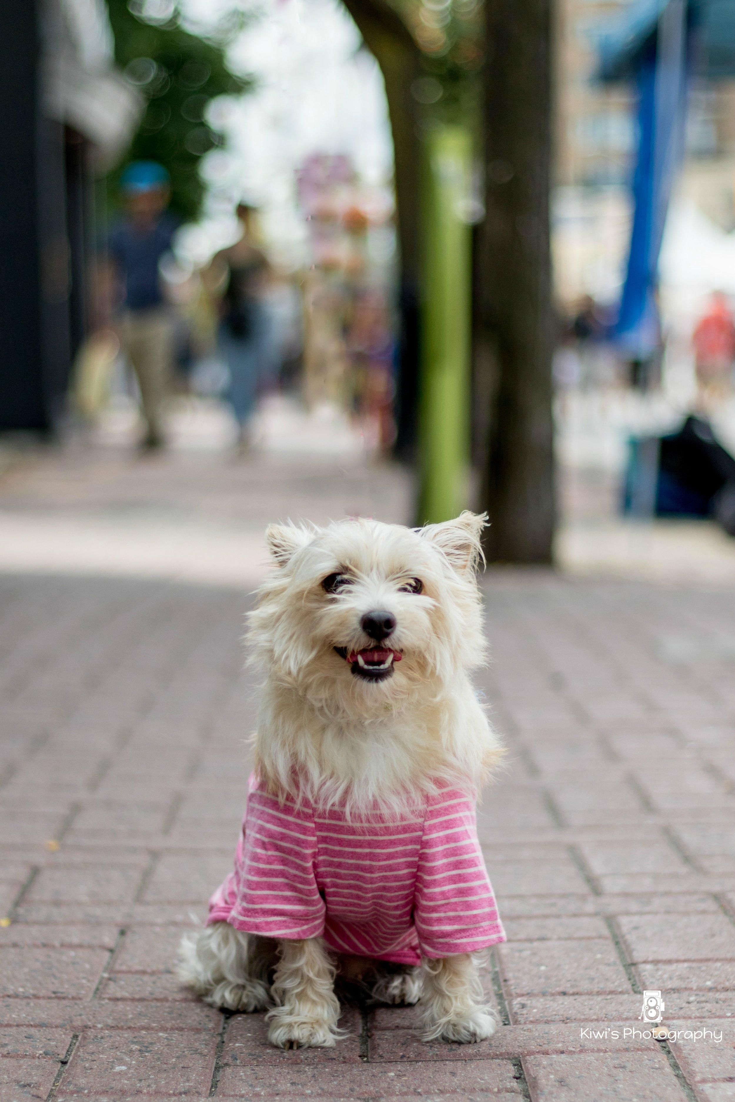 Dog friendly Ottawa: Peach at the Westboro Fuse