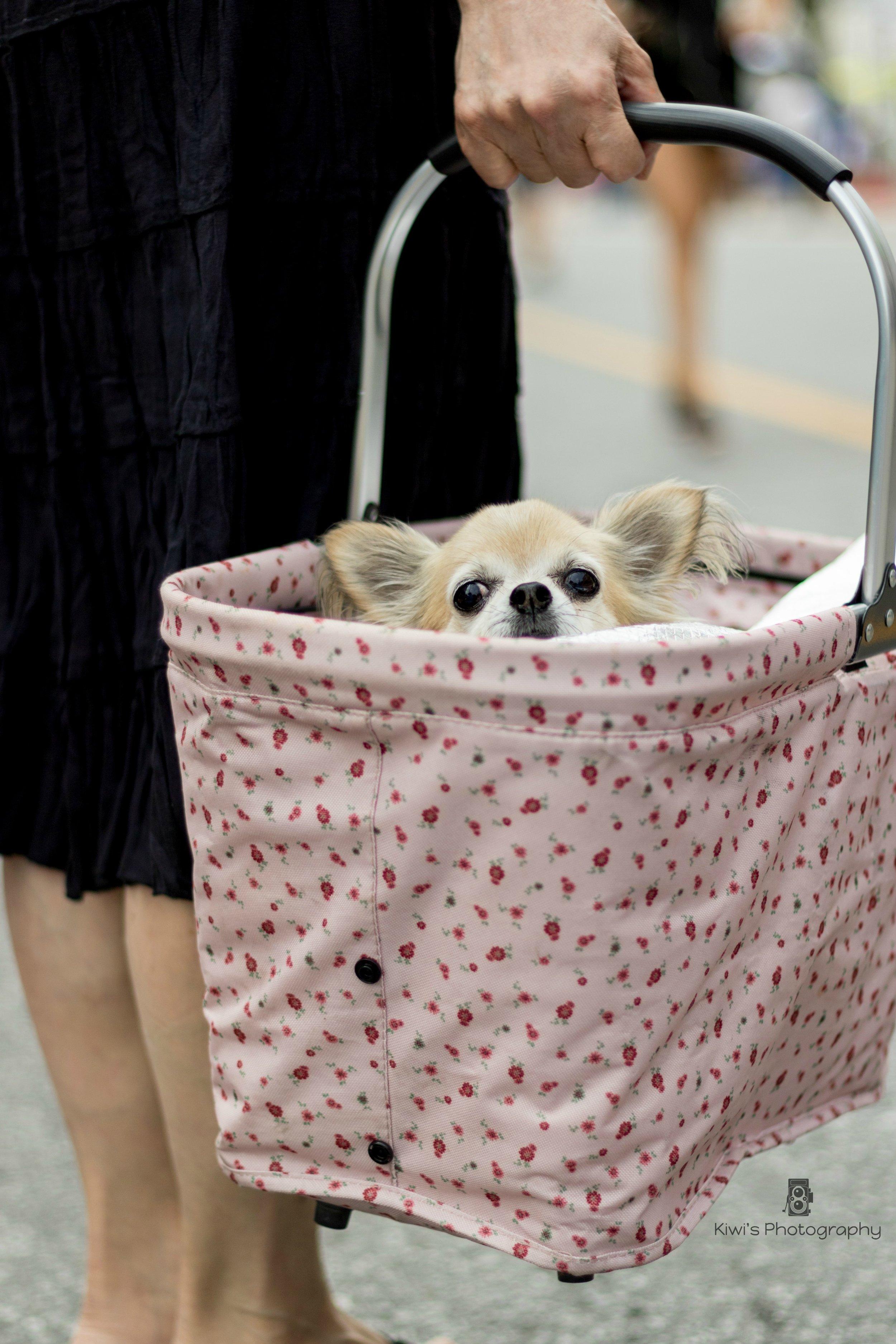 Dog Friendly Ottawa: Daisy at the Westboro Fuse