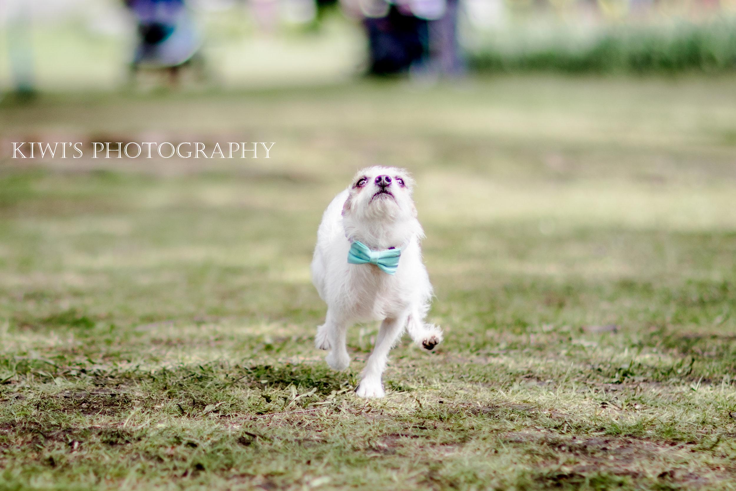 Dog Friendly Ottawa - Canadian Tulip Festival
