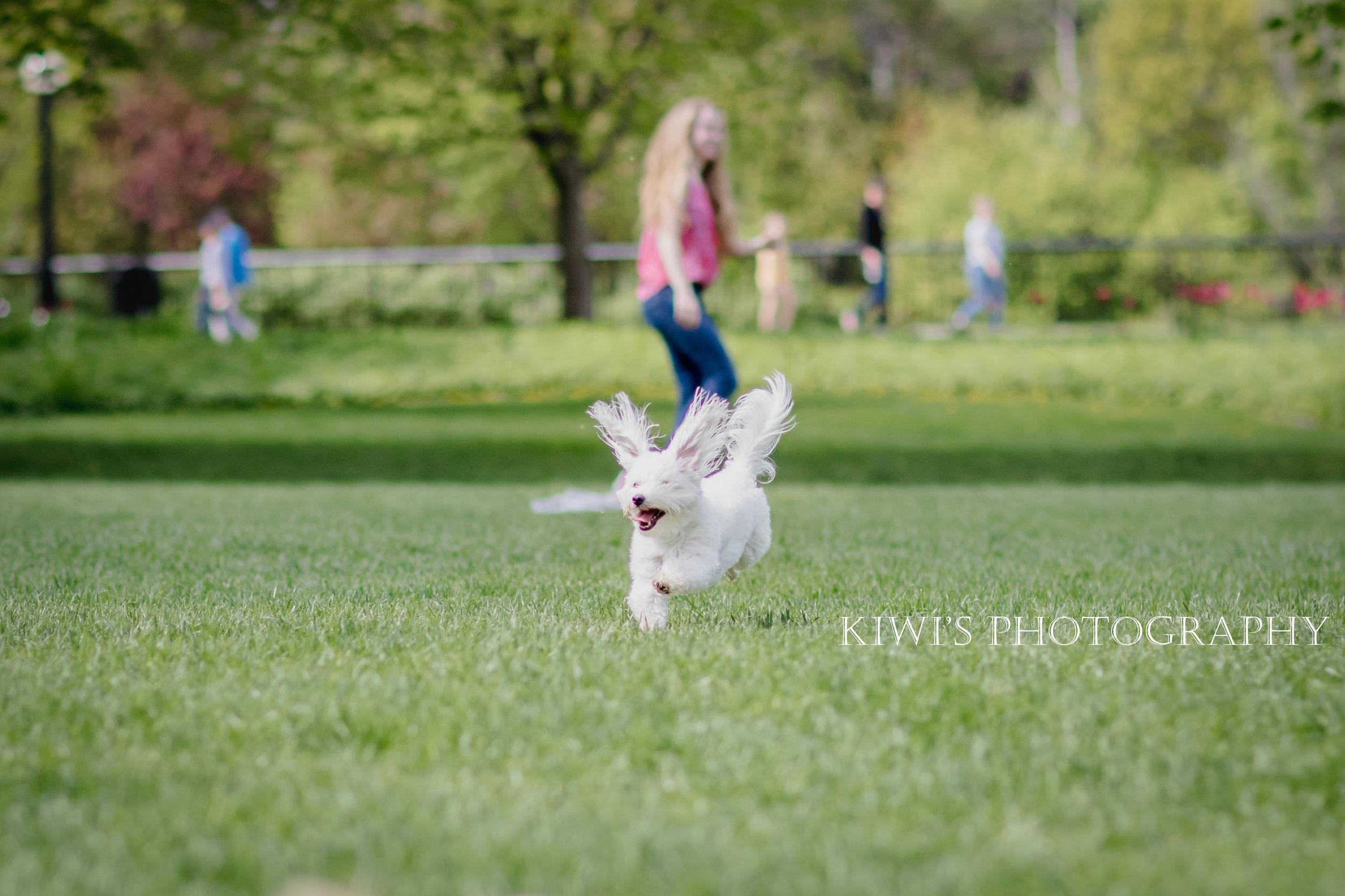 Ottawa Small Breed Meetup Group - Flying Bovie
