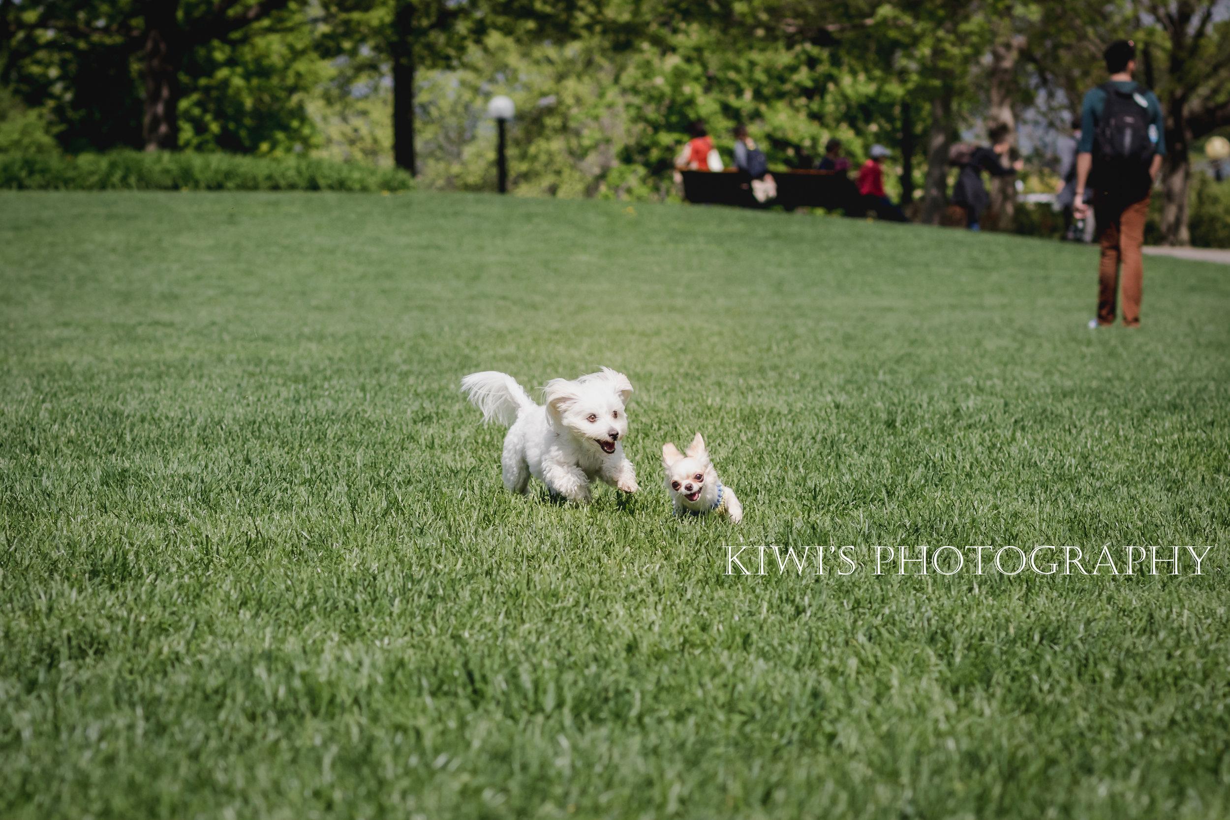 Ottawa Small Breed Meetup - Pompadour & Bovie